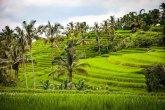 Jatiluwih-Rice-Terraces