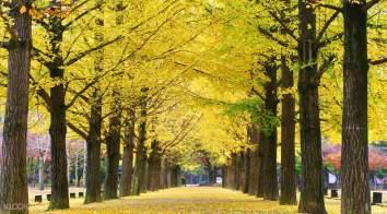 nami-island-autumn-fall-foliage-destinations-fall-foliage-places-9