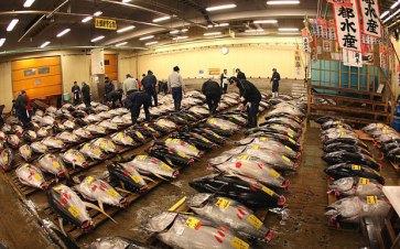 Tsukiji-Fish-tuna-_3571736b