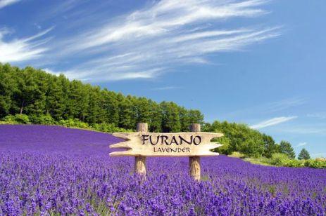 furano lavender farm