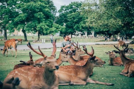 nara-deer-park